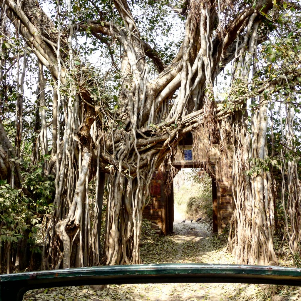 Rantambore National Park